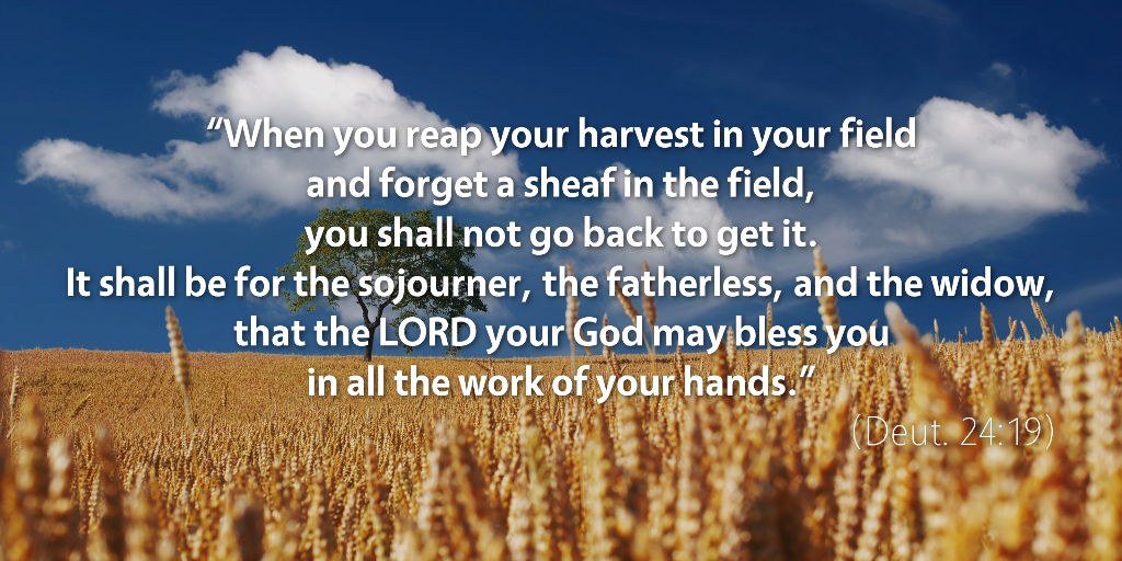 Deuteronomy 24: When you reap your harvest in your field and forget a sheaf in the field.
