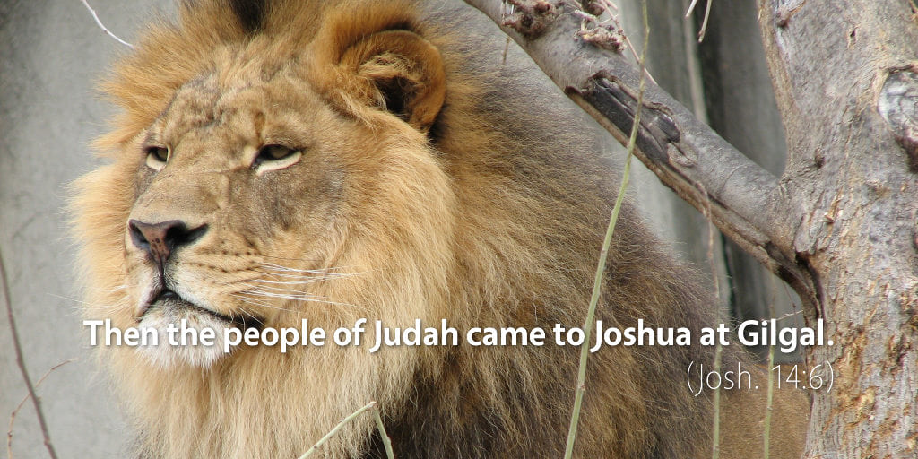 July 11th: Bible Meditation for Joshua 14–15
